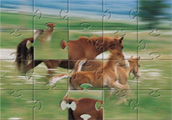 Horse Family Jigsaw Puzzle